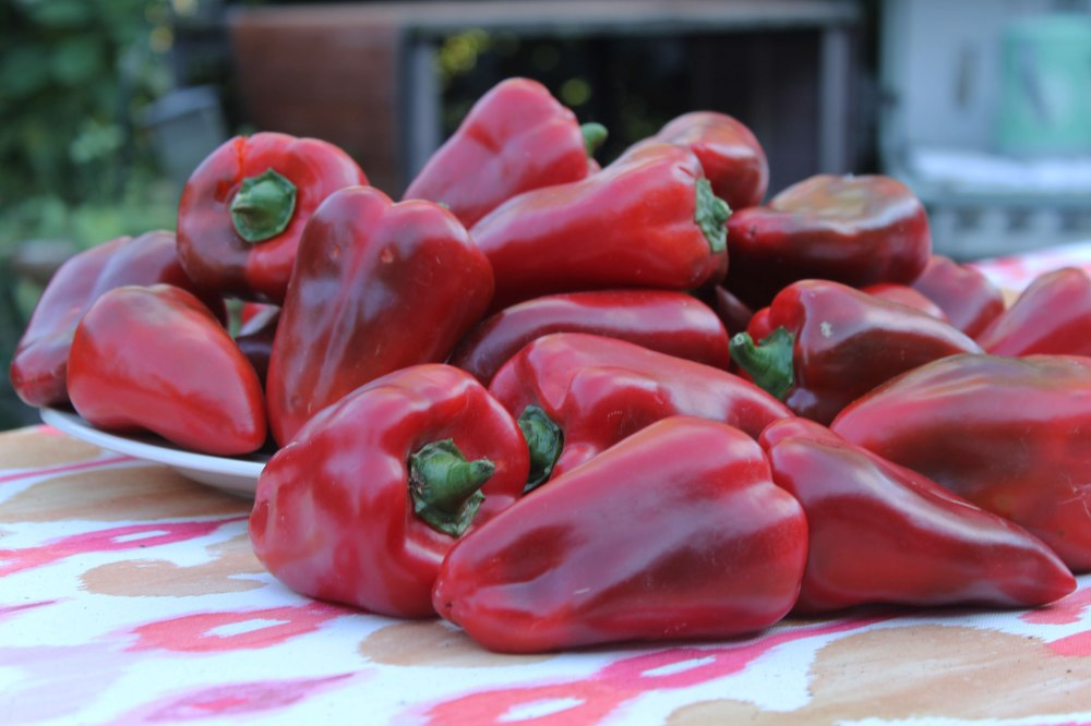 IMG_1603-red-pepper